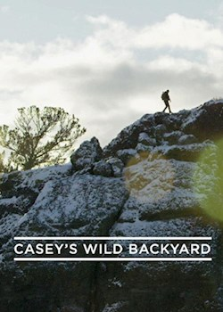 Casey's Wild Backyard